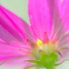 Pretty in Pink by Jean Poulton