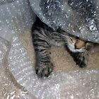 Mikino - Burrowng in Bubble-Wrap by Jaeda DeWalt