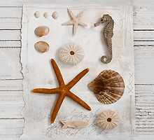Beach treasures by artsandsoul