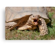 tortoise at zoo Canvas Print