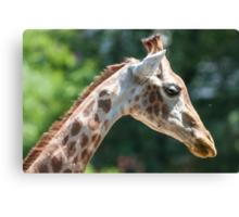 giraffe at the zoo Canvas Print