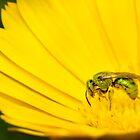 Metallic Green Bee by Dan Dexter