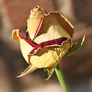 A Fading Rose by Terri~Lynn Bealle