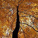Fall Canopy by Terri~Lynn Bealle