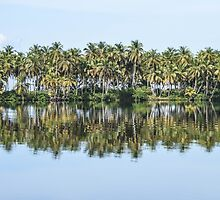 Palm Trees Reflected by Dave Cole