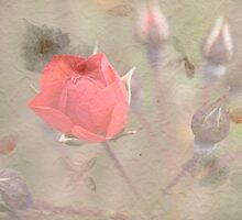 Textured Rose by Deborah McGrath