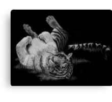 White Tiger Rolling in Grass Canvas Print