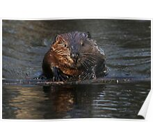 A beaver's floatation device Poster