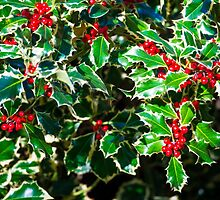 Christmas Holly  by Adrian Alford Photography