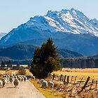 Sheep at Mount Earnslaw by Adrian Alford Photography