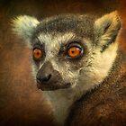 Lemur by John Conway