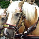 2 Horse-power by Arie Koene