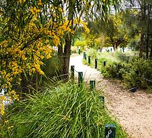 Footpath at Lake Weeroona, Bendigo by Steven Jodoin