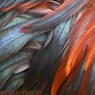 Nature's Abstracts #1 by Marilyn Harris Photography by Marilyn Harris