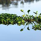 Floating leaves by mypic