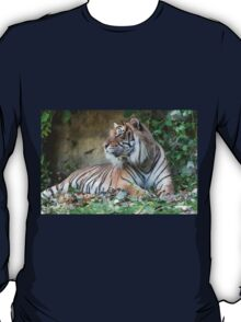 tiger at the zoo T-Shirt