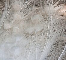 peacock feathers by spetenfia