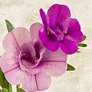 Calibrachoa Petunia Blossoms - Macro by Sandra Foster