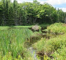 beaver lodge in pond by grichuate