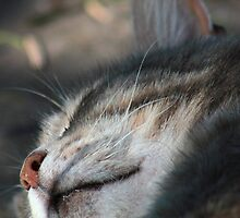 Close-up of tabby cat sleeping by turniptowers