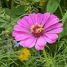 Unknown flower name by 29Breizh33