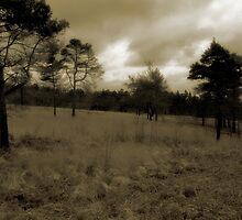 Ashdown Forest, West Sussex, England by Avalinart