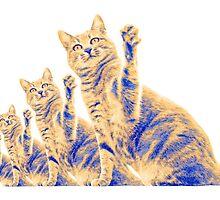 Cat High Five x Four by Paul Westermann