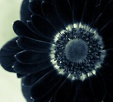 Midnight Velvet by Caitlyn Grasso