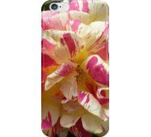 Raspberry Ripple Rose iPhone Case/Skin
