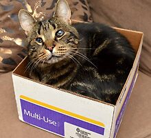 Rufus in a box by furrtographer