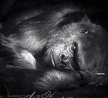 Sleeping Giant by Noeline R