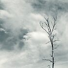 Lone Tree Against the Sky by April Koehler