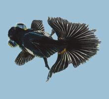 bug-eyed goldfish by dennis william gaylor