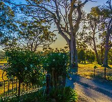 Entrance to Bullock Creek Winery at Belvoir Park by Steven Jodoin