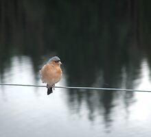 Bird on a Wire by hmp1963