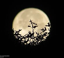 Tree In The Moon Shadow by anneseyeview