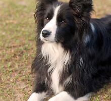 Mans best friend... by Jenny Dean