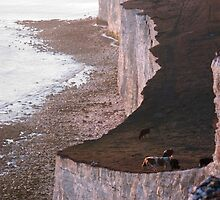 Cows on the edge of the cliff, Seven Sisters, Sussex by Avalinart