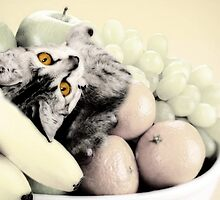 Kitty in the fruit bowl by missmoneypenny