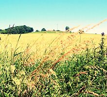 Grasses on the Field IV by rose-etiennette