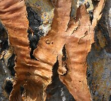 Abstract in Bark by Marilyn Harris