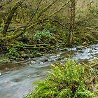 Coliban River - Trentham Victoria by Chris Kean