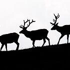 Elk Silhouettes by Eivor Kuchta