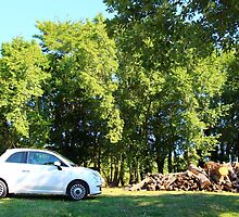 The Fiat and the Wood Pile by AdelaideStreet