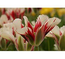 Mountain Flower - JUSTART © Photographic Print