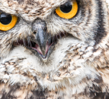 African Spotted Eagle Owl Sticker