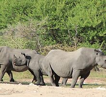 Black Rhino - Family of Horns by LivingWild