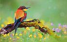 Bird art by jeevin