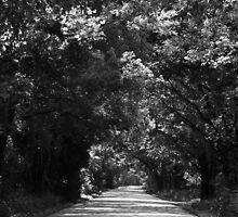 Dallas Road by Michael Wicks