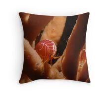 Sea Flea, Henry Head, Botany Bay Throw Pillow